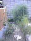 20081124saien